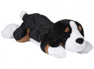 Large Lying Bernese Dog