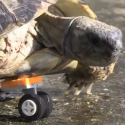 Lego wheel gives Tortoise new lease of life